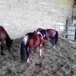 exte_poneys2
